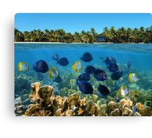 Shoal of fish in a coral reef and tropical shore horizon Canvas Print