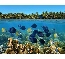Shoal of fish in a coral reef and tropical shore horizon Photographic Print