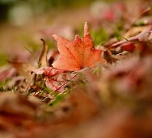 A Different Kind of Autumn by Mel Sinclair