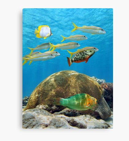 School of tropical fish above coral Canvas Print