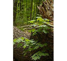 Along the path - Mud Lake, Ottawa, Ontario Photographic Print