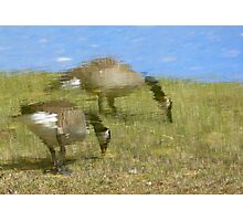 Geese Reflection Photographic Print