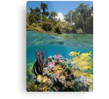 Colorful underwater marine life near tropical coast Metal Print