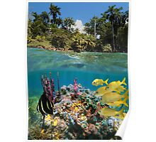 Colorful underwater marine life near tropical coast Poster
