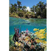Colorful underwater marine life near tropical coast Photographic Print
