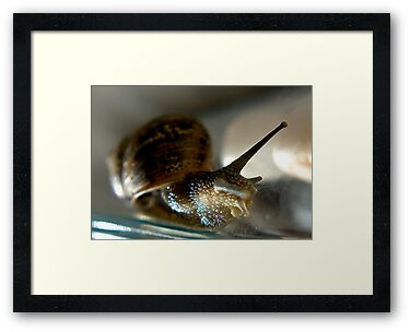 Snail #1 by Trevor Kersley