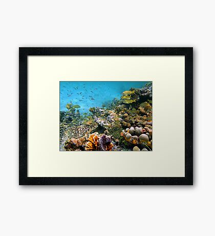 Sea turtle in a coral reef with shoal of tropical fish Framed Print