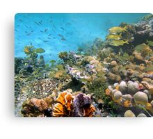 Sea turtle in a coral reef with shoal of tropical fish Metal Print