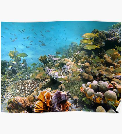 Sea turtle in a coral reef with shoal of tropical fish Poster