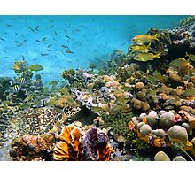 Sea turtle in a coral reef with shoal of tropical fish Photographic Print