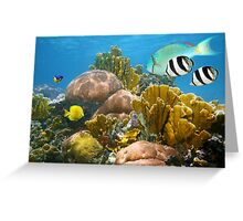 Healthy coral reef and colorful tropical fish Greeting Card