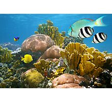 Healthy coral reef and colorful tropical fish Photographic Print