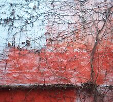 Courtyard Wall in Brugges by Danielle  La Valle