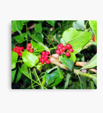 Shiney berries Canvas Print