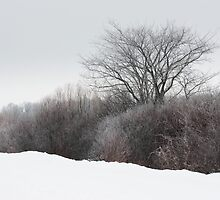 A Tree Among the Brush by April Koehler