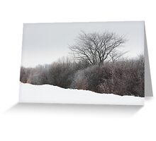 A Tree Among the Brush Greeting Card