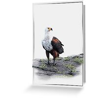 African Fish Eagle on white background Greeting Card
