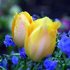 Tulips in Blue by Rhonda  Thomassen