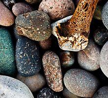 Coloured pebbles and seaweed skeleton on coast by Gabor Pozsgai