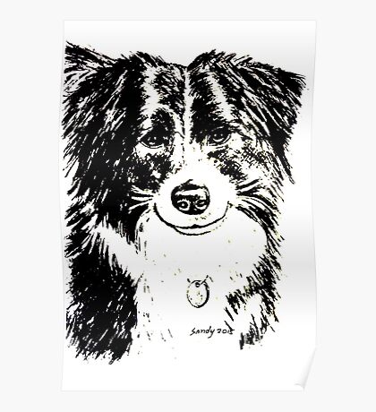 Border Collie Dog - Drawing Poster