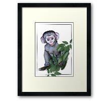 Vervet Monkey baby on white background Framed Print