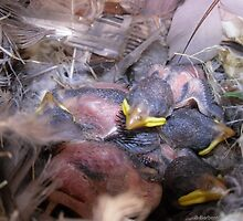 Four Baby Birds Huddled Together by Barberelli