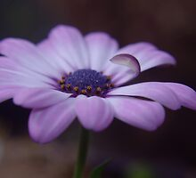 A BLUE MORNING FLOWER  by SwanSong