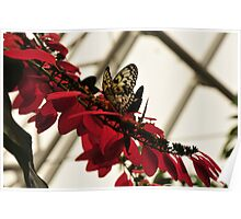 Butterfly on red flowers Poster