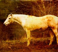 Vieja Horse by Kelly J  Parsons