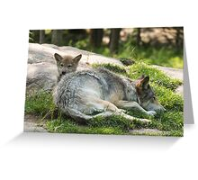 Timber wolf and pup Greeting Card