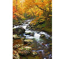 AUTUMN IN TREMONT Photographic Print