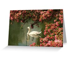 Spring time Swan framed by blossom Greeting Card