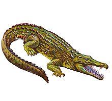 Vintage Crocodile Illustration Photographic Print