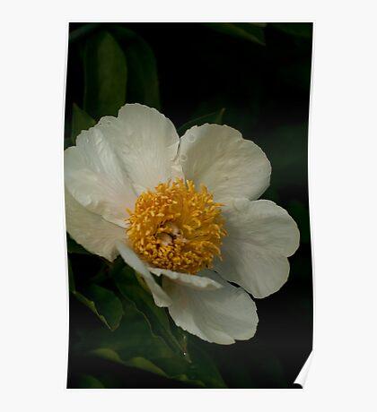 Full Bloom Poster