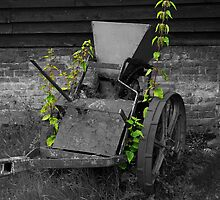 Old Timer by Kim Slater