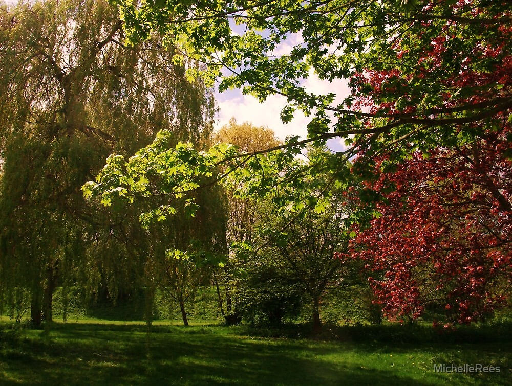 Colourful Spring Trees in the Sunshine by MichelleRees