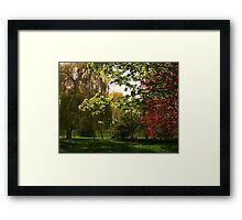 Colourful Spring Trees in the Sunshine Framed Print