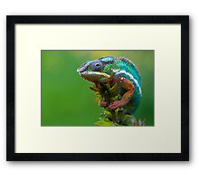 Natures beauty Framed Print