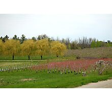 Apple Orchards in Vermont Photographic Print