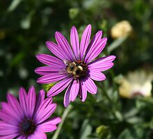 Busy bee  by Livingimages