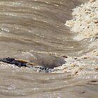 Surfing Crocodile by myraj