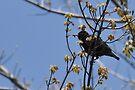Bird by Marlene Piccolin