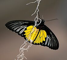 Hanging by a thread by Tracey  Dryka