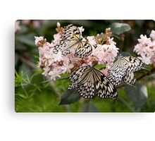 A Butterfly Party Canvas Print