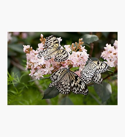 A Butterfly Party Photographic Print