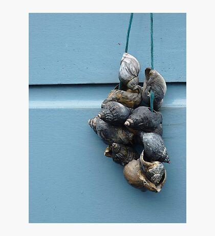 Shells, Leiden Photographic Print