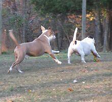Yeeeeee Haaaaaa!!!   Playtime!!! by Ginny York