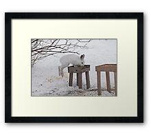 Its a Leap Year!!  Ottawa, ON Framed Print