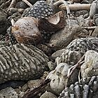 Reef rocks by Duncan Cunningham