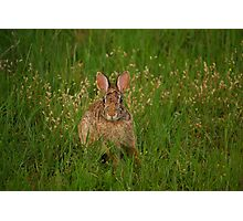 The bunny Photographic Print